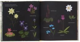 The Golden Wonderflower, Benjamin Flouw (Gestalten, 2018)